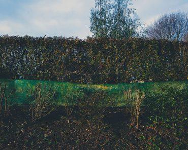 Ayer photographe aubigny vendee parents enfance souvenir amenagement paysager