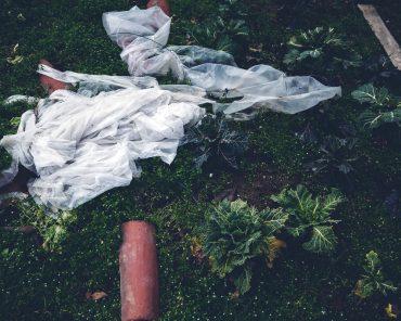 Ayer photographe aubigny vendee parents enfance souvenir le potager en hiver
