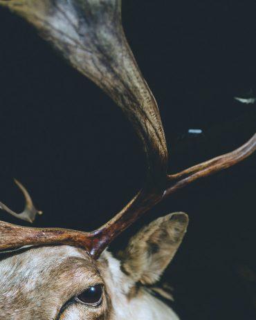 Ayer photographe aubigny vendee parents enfance souvenir l'oeil du cerf