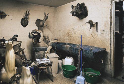 Ayer photographe rennes taxidermie naturaliste vue d'ensemble de l'atelier et du bain de tannage