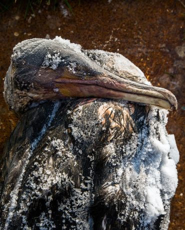 Ayer photographe aubigny vendee parents enfance souvenir un cormoran mort sur une plage