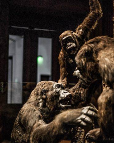 Ayer-photographe-paris-urbain-derive-gorille