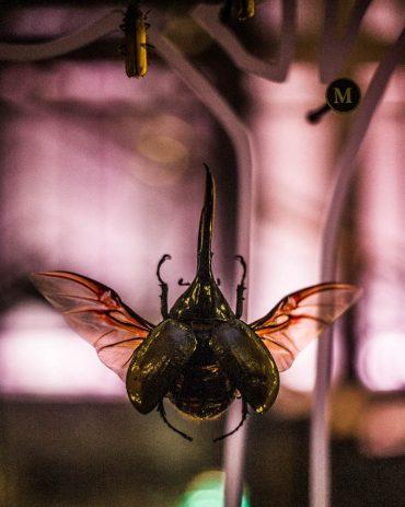 Ayer-photographe-paris-urbain-derive-scarabee