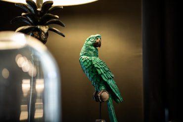 Ayer Photographe Rennes Nantes Maisons du Monde Hôtel & Suites perroquet