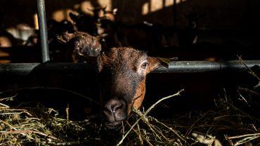 Ayer-photographe-elevage-exploitation-agricole (16)